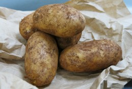 Nicola potatoes