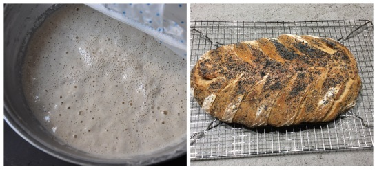 from starter to bread