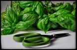 homegrown basil