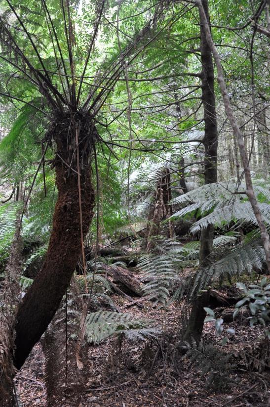 rainforest near Cambarville